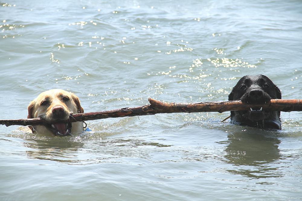 La voce dei piacentini, l'opinione sui divieti ai cani sulla spiaggia del Trebbia a Bobbio