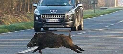 Fauna selvatica, dissuasori acustici e sensori luminosi per ridurre gli incidenti stradali