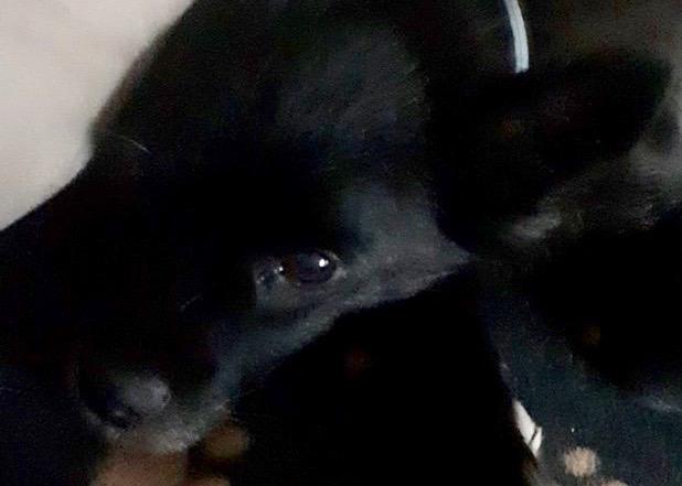 Cani e gatti, inizio estate nera tra rinunce e abbandoni, cosa fare per contrastare questo triste fenomeno? La Voce dei Piacentini